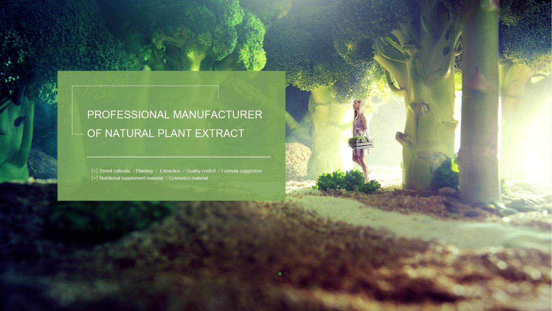 Professional manufacturer of natural plant extract